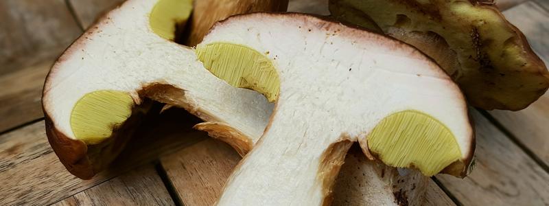 kit funghi